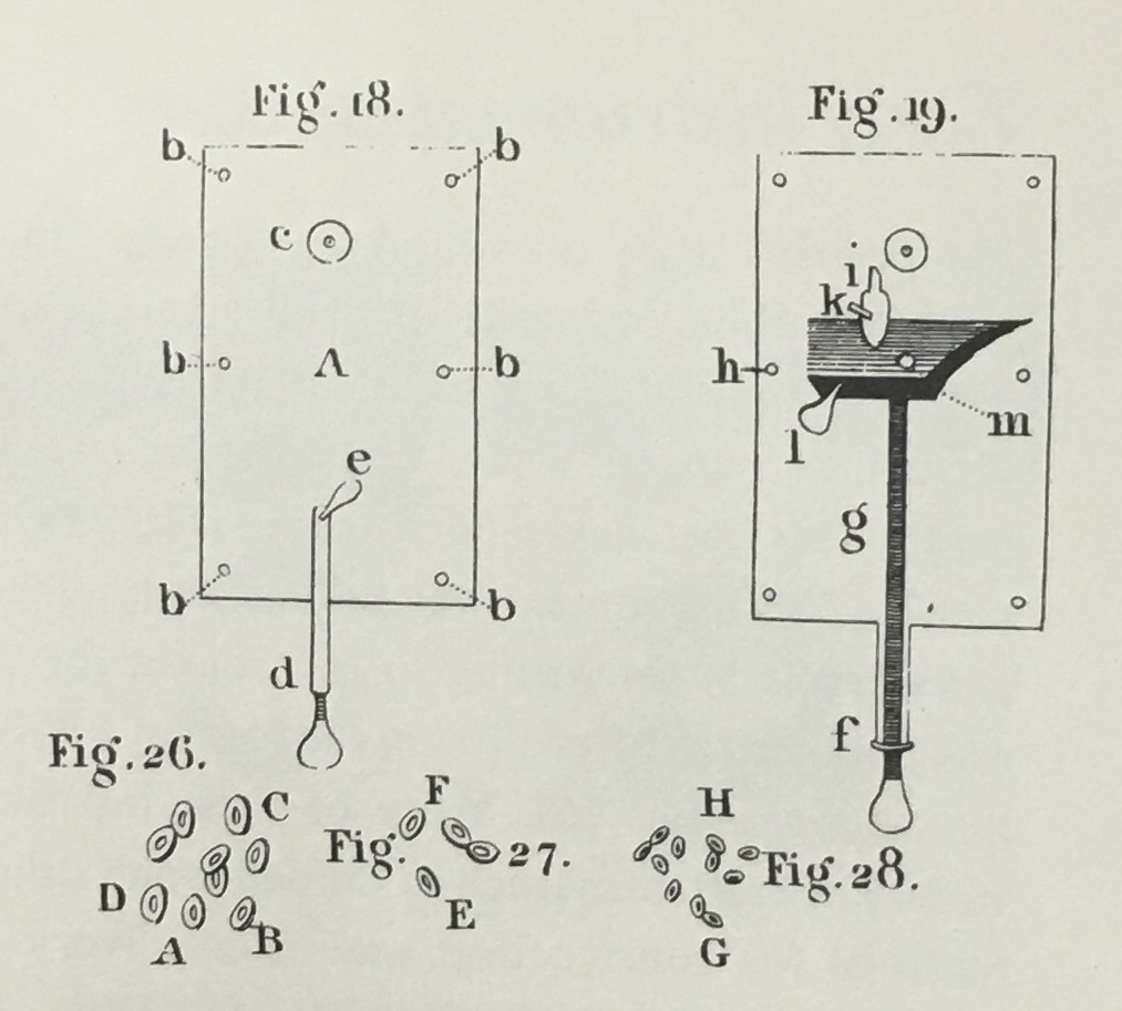 Image by van Leeuwenhoek of red blood cells examined under a microscope.